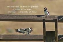 xp3-dot-us_DSC_6622 woodpecker, 2, in my name