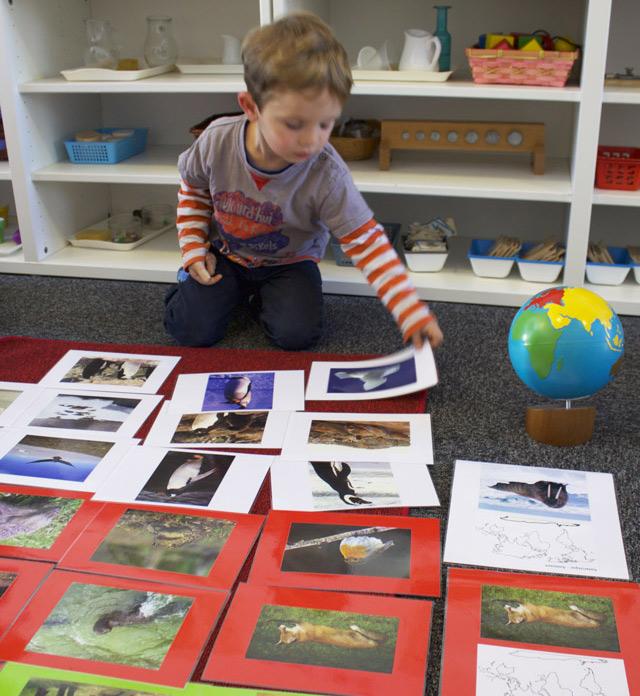 montessori culture formation