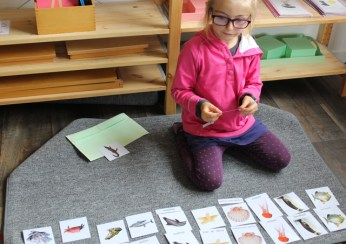 nomenclature montessori