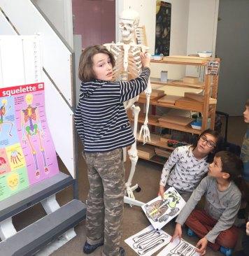 squelette oscar montessori international bordeaux