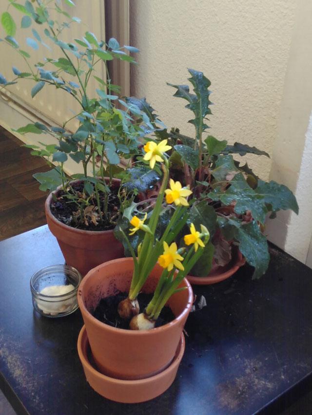 table nature printemps montessori 3