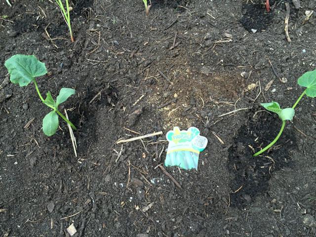 plantes montessori 5