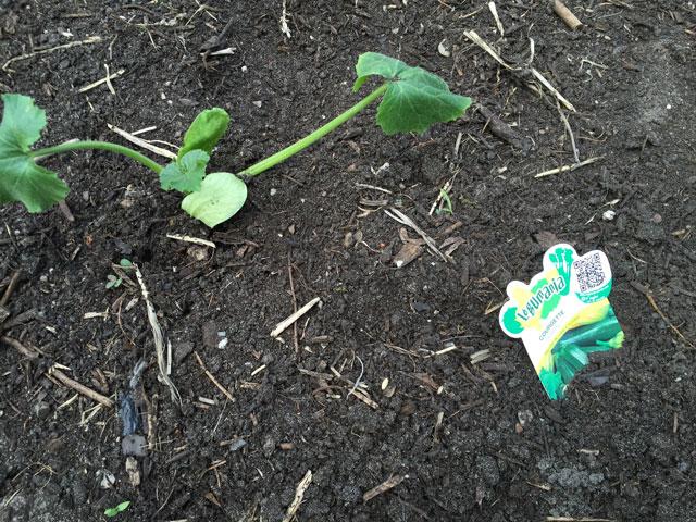 plantes montessori 6
