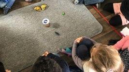 montessori international bordeaux insectes 9