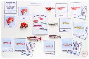 Montessori-Salmon-Lifecycle-3-Part-Matching-Cards