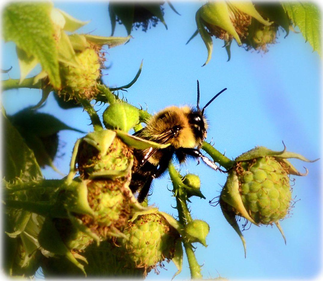 A closer look at a bee