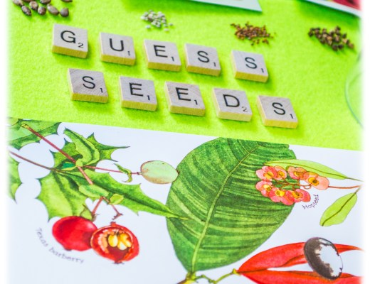 Seed-Plant-Montessori-Matching-Activity