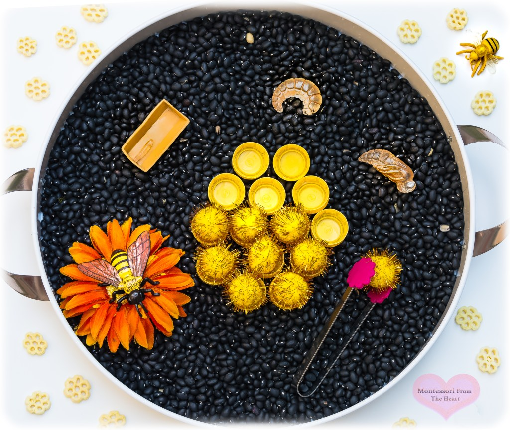 Bee-Lifecycle-Black-Beans-Safari-Ltd