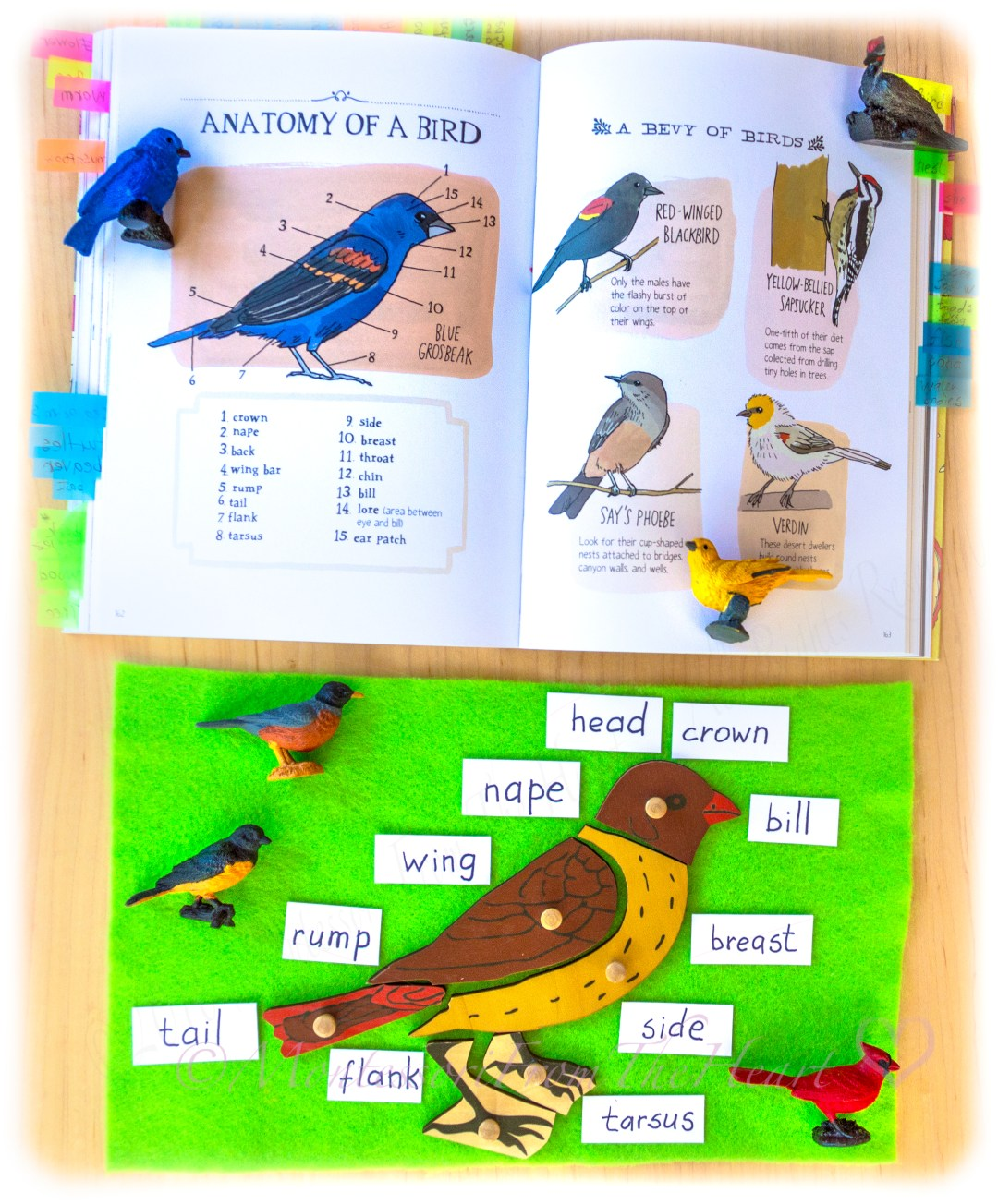 Parts of a Bird Montessori Kids Activities