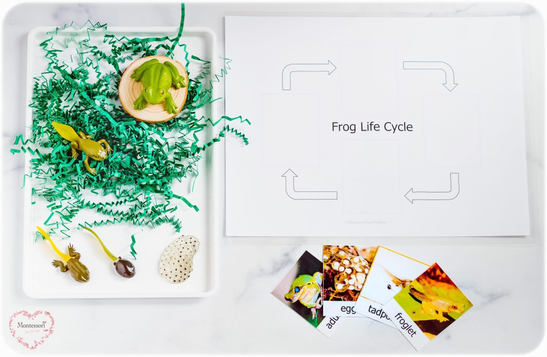Frog-Life-Cycle-Montessori-Small-World-Sensory-Play-Tray