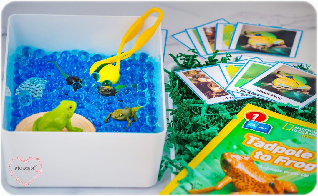Frog-Life-Cycle-Montessori-Sensory-Bin