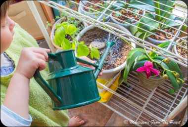 Caring-For-Plants-Montessori-care-of-the-environment