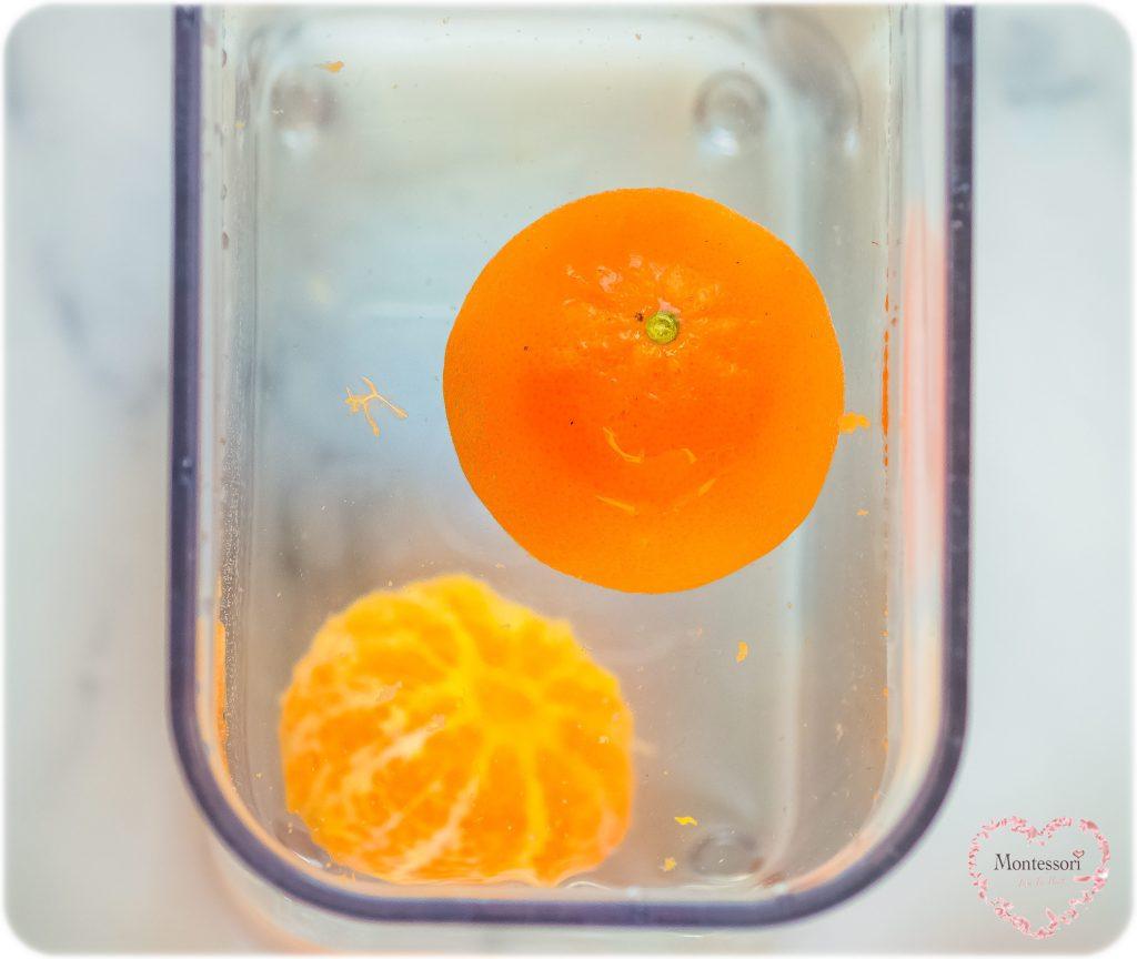 TANGERINE SINK-OR-FLOAT TASTE-SAFE KIDS STEM SCIENCE Experiment