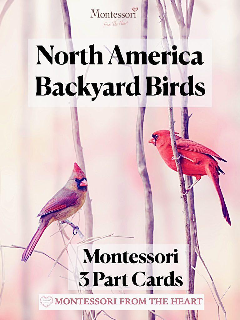 North America Backyard Birds