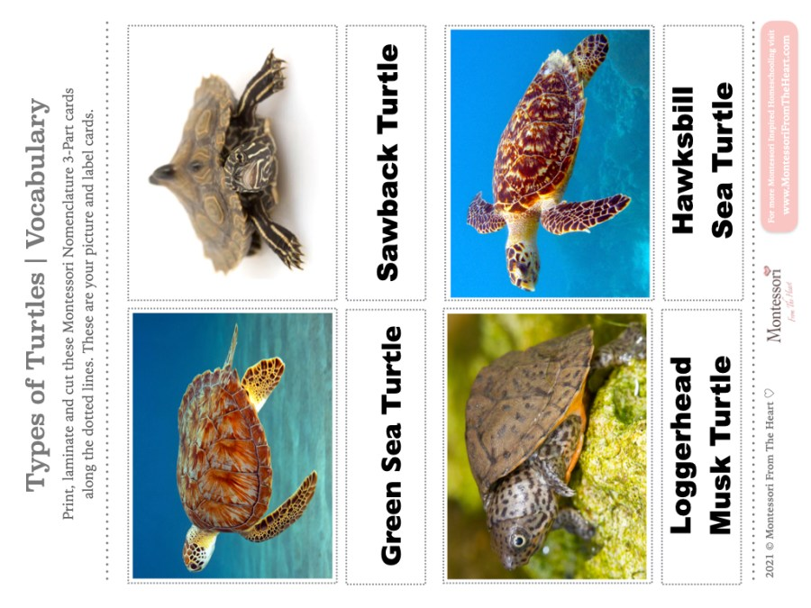 -TYPES-OF-TURTLES Learning Kit Montessori 3-Part Cards