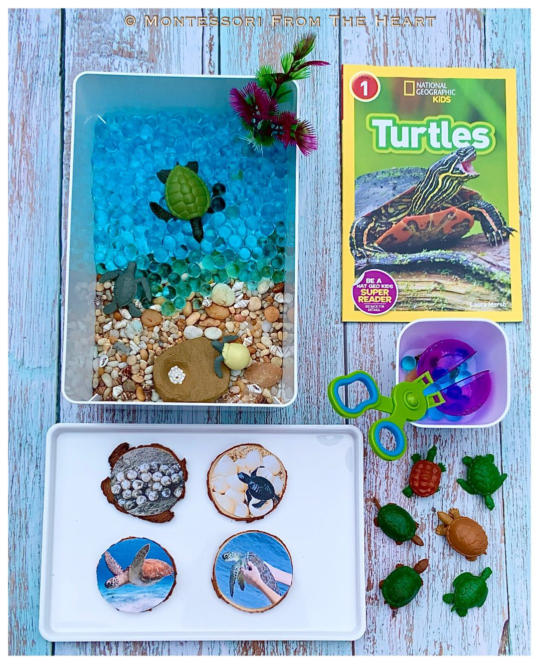 *Turtles Life-Cycle Learning Kit