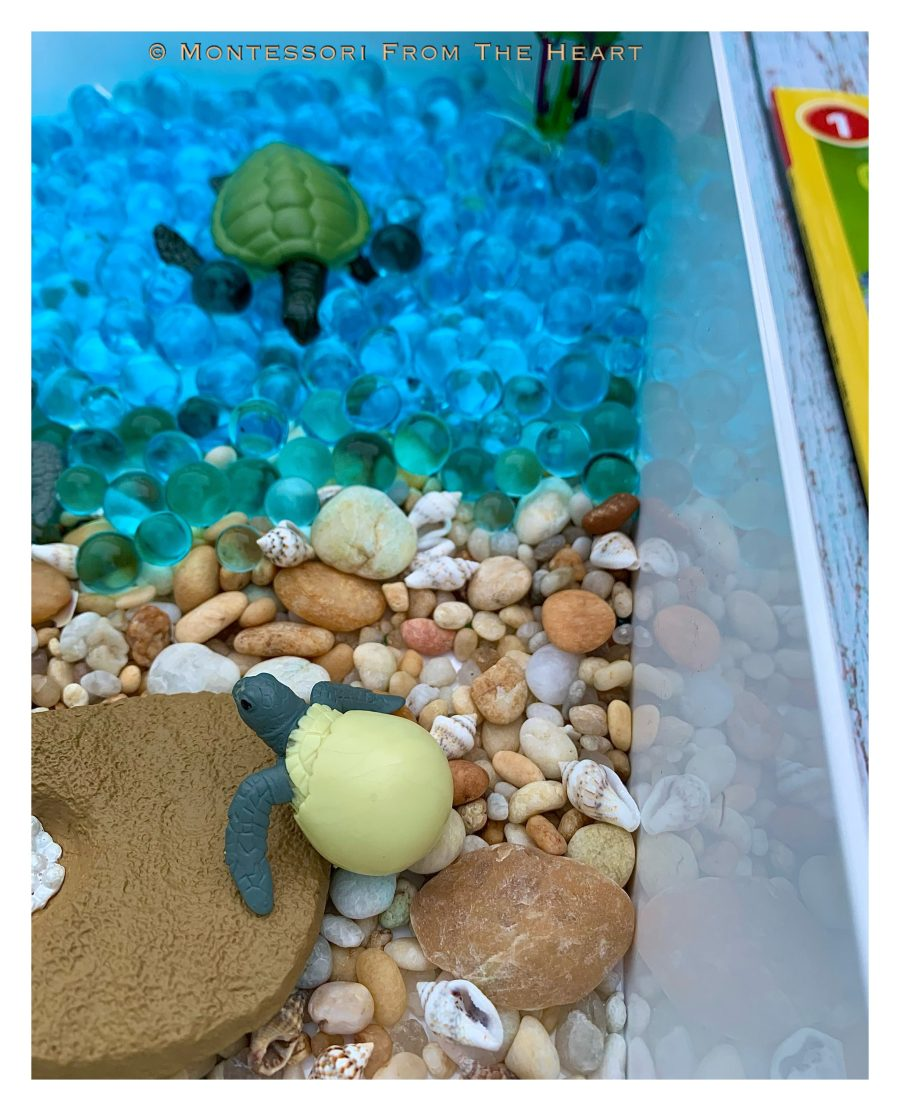 Turtles and Life-Cycle Learning Kit-Hatchling