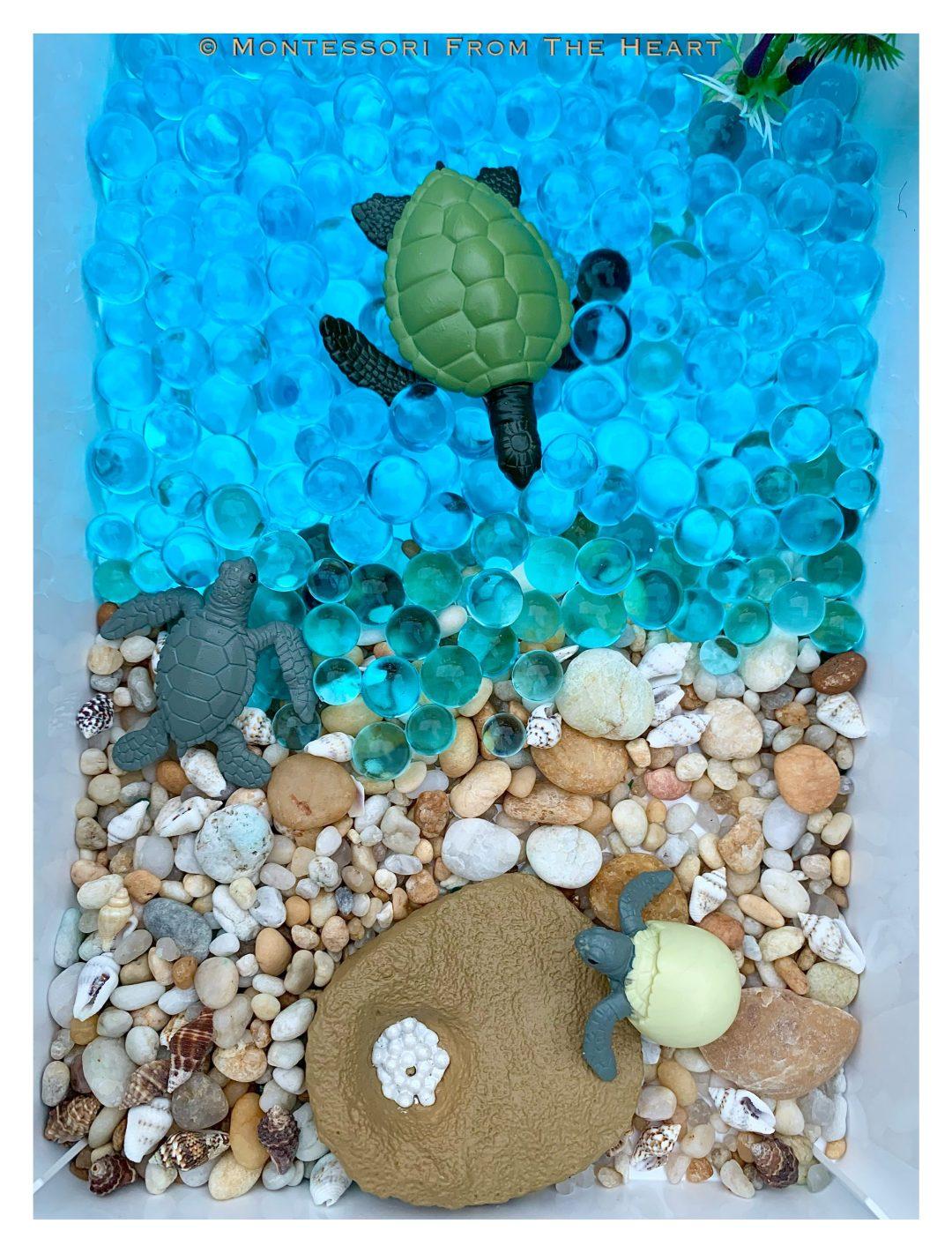 Turtles and Life-Cycle Learning Kit Sensory Bin