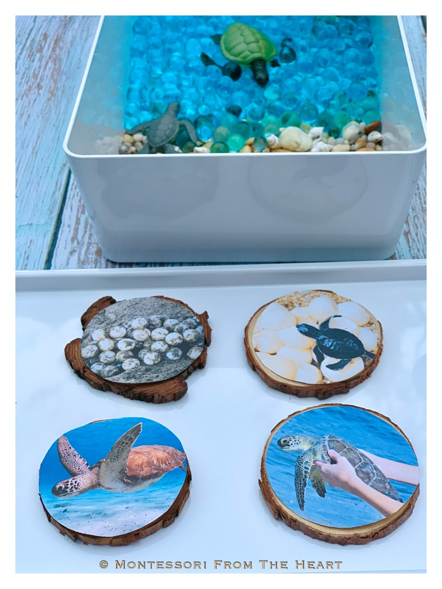 Turtles and Life-Cycle Learning Kit Wooden Slices Stages