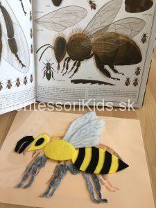 Montessori včely