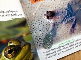 Životný cyklus žaby