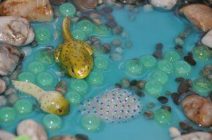 Žaba životný cyklus