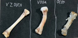 Pokus ľudské telo