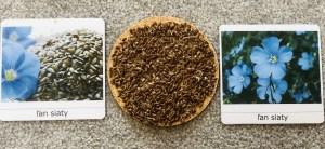 montessori karty semeno