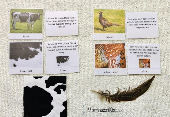 Definičné karty zvieratá