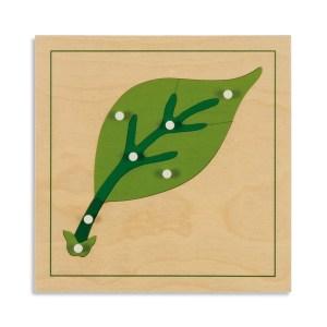 puzzle-de-botanique-feuille