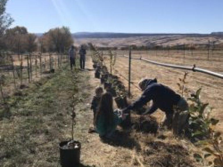 Orchard Establishment