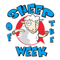 Sheep Of The Week