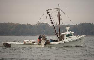 Fishery Management Plans – Oysters.