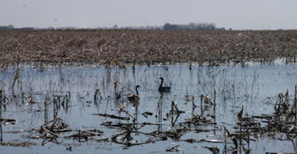 Feds' jargon-filled memo won't help farmers looking to manage wetlands