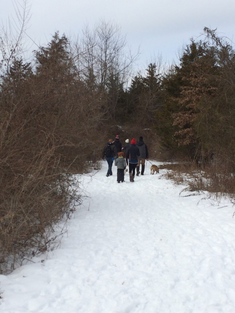 We went for a walk on the snowy arboretum trail.