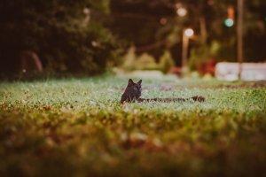 Cat Pet Feline Animal Fur Kitty  - dinohenryphotography / Pixabay