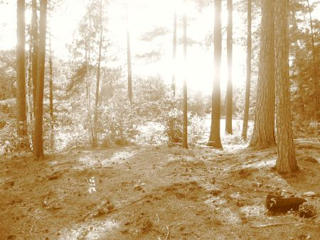 Photo of forest with sunlight