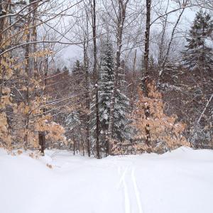 Pour du ski de fond à Chertsey