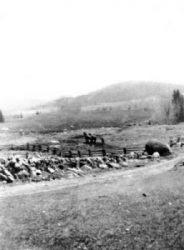 Chertsey: champs cultivés