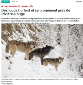 Loups à Rivière Rouge