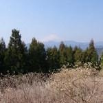 丹沢・ミツバ岳~ミツマタの花を見に行く