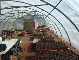 springinthepolytunnel