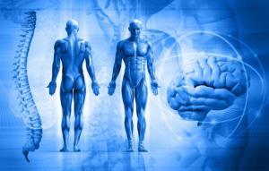 10-curiosidades-sobre-el-cuerpo-humano_0