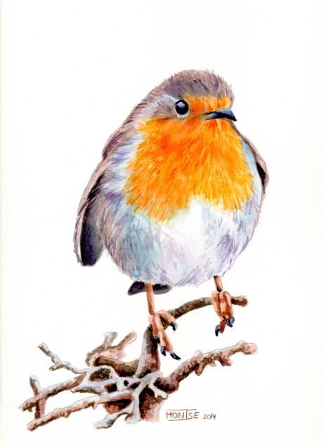 Pit-roig | Petirrojo | European Robin (Erithacus rubecula)