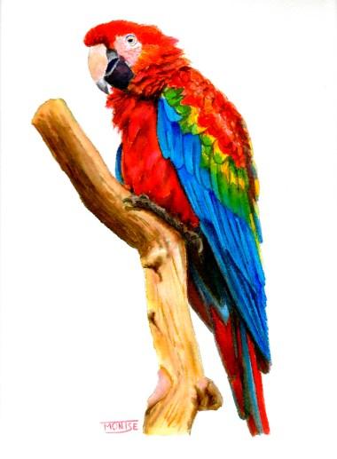 Retrat de Guacamai (aquarel·la) | Retrato de Guacamayo (acuarela) | Macaw portrait (watercolor)