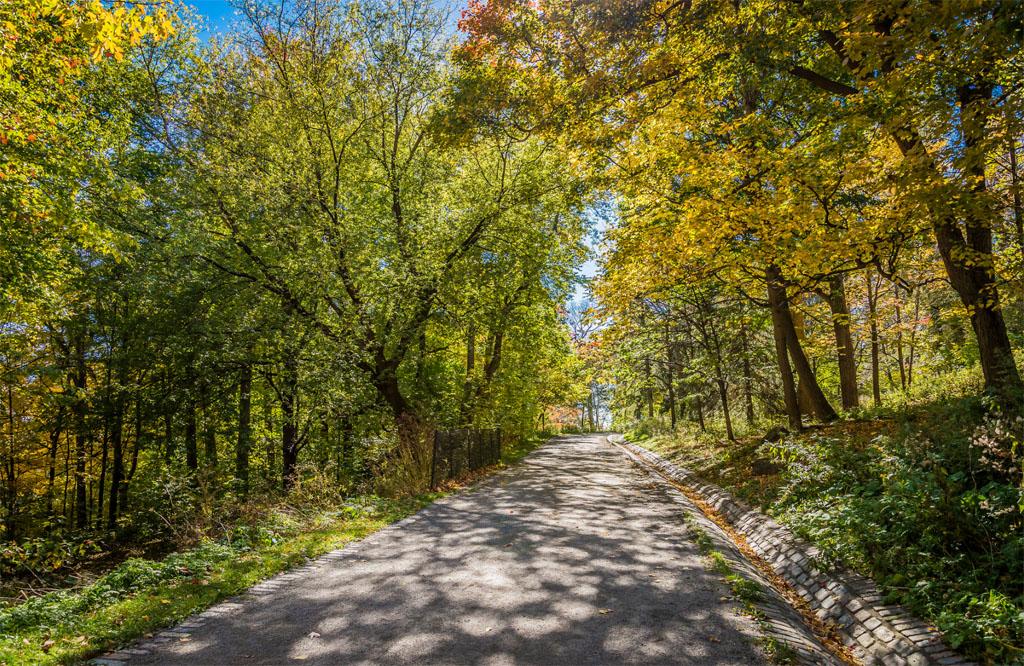 Chemin dans le parc du Mont Royal