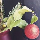 festive house plants