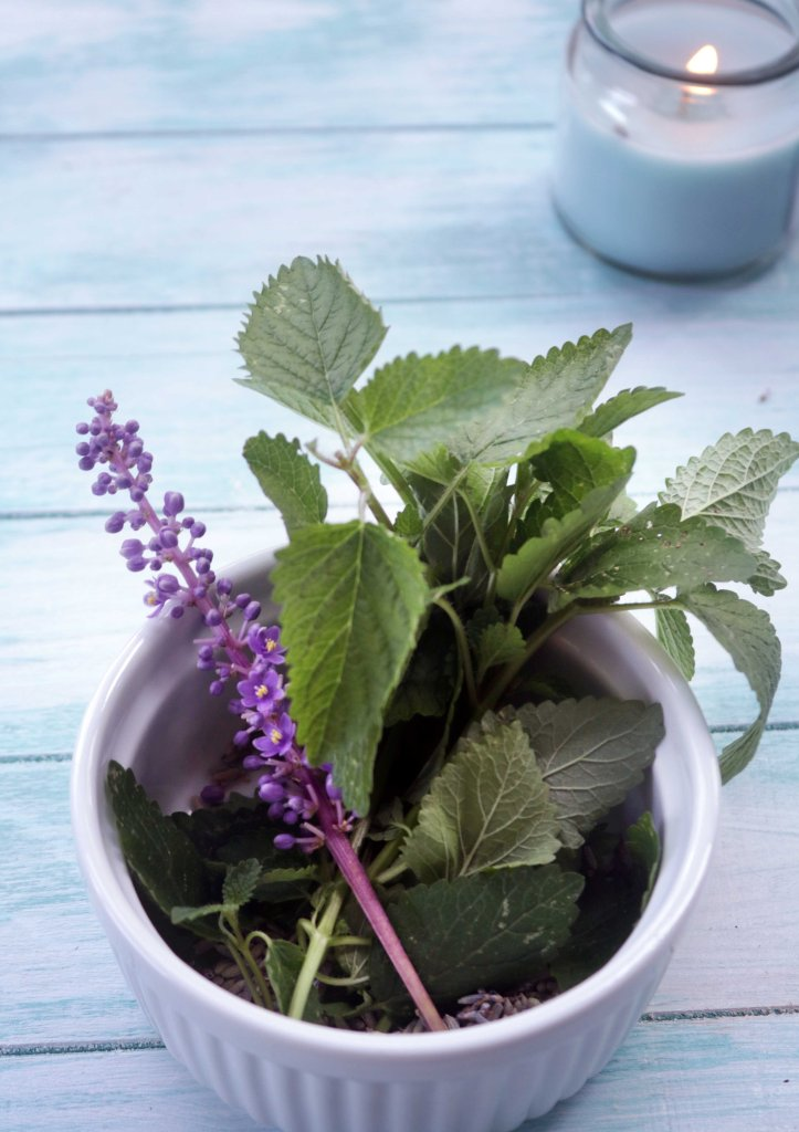Lemon balm and purple flowers.