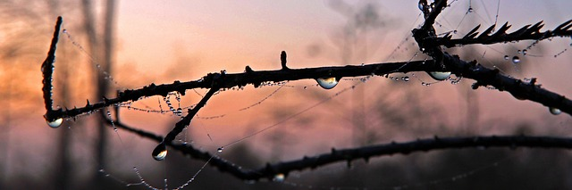 morning-dew-1068342_640