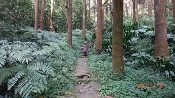 終於看到真的森林